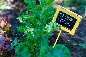 Grown Local Garden 200